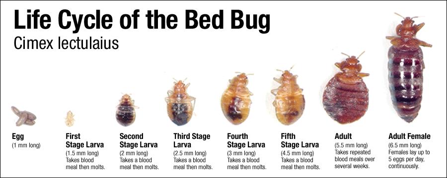 Bed Bugs Ohio University